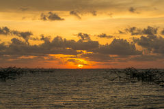 Beautiful sunrise and giant trap fish at Pakpra canal, Pattalung Royalty Free Stock Image