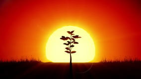 Beautiful Sunrise and Growing Tree. Achievement and Progress Concept 3d animation. Rising Sun Gives New Life. HD 1080