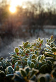 Beautiful sunrise landscape. Stock Photo