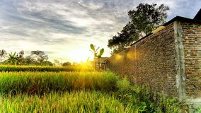 Beautiful sunrise light  appear from epic cloud. And the flare hit rice field and  brick wall Stock Images