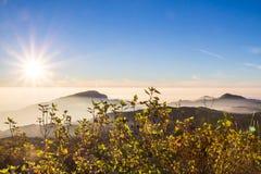 Beautiful sunrise and mist at Doi Inthanon National park Royalty Free Stock Photos