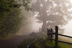 Beautiful sunrise with the morning mist Royalty Free Stock Photo