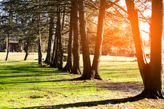 Beautiful sunrise in the morning and shadows of the tree i. N village royalty free stock images