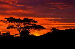 Beautiful sunrise out in the country with silhouetted of tree Stock Photography