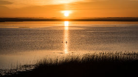Beautiful sunrise over country lake Royalty Free Stock Photography
