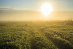 Beautiful sunrise over the field. Royalty Free Stock Photos
