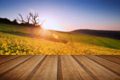 Beautiful sunrise over field of rapeseed in countryside in Sprin Stock Images
