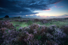 Beautiful sunrise over flowering heather Royalty Free Stock Images