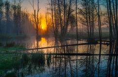 Beautiful sunrise over foggy wetlands Royalty Free Stock Images