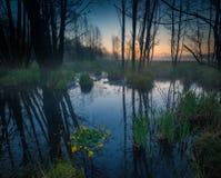 Beautiful sunrise over foggy wetlands Stock Photography