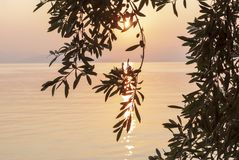 Free Beautiful Sunrise Over Greece And Silhouette Of Olive Tree Branches. Corfu Island. Symbol Of Peace, Space For Text Royalty Free Stock Photo - 168681405