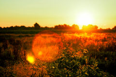 Beautiful sunrise over a green field Stock Images