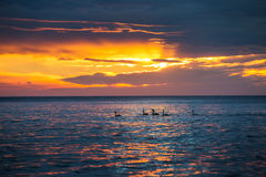 Beautiful sunrise over the horizon, dramatic clouds and swans Stock Photo