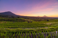 Beautiful sunrise over the Jatiluwih Rice Terraces Stock Images