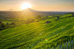 Beautiful sunrise over the Jatiluwih Rice Terraces Royalty Free Stock Image