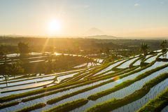 Beautiful sunrise over the Jatiluwih Rice Terraces Royalty Free Stock Photo