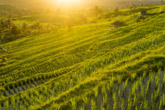 Beautiful sunrise over the Jatiluwih Rice Terraces Stock Photo