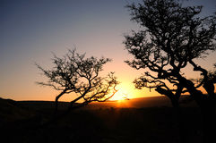 The beautiful sunrise over  the moor. A lonely trees on Dartmoor, Devon, UK Royalty Free Stock Photo