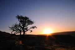 The beautiful sunrise over  the moor Royalty Free Stock Photo