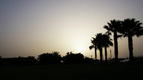A beautiful sunrise over palm trees in an exotic country.  stock video