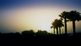 A beautiful sunrise over palm trees in an exotic country.  stock video footage