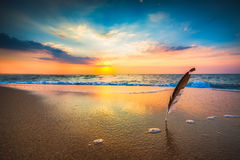 Beautiful sunrise over the sea and gull feather stuck into the s Stock Photography