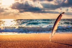 Beautiful sunrise over the sea and gull feather stuck into the s Royalty Free Stock Photography