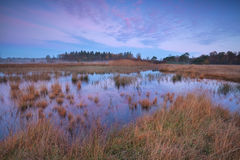 Beautiful sunrise over swamp in forest Stock Photography