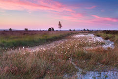 Beautiful sunrise over swamp in summer Royalty Free Stock Images