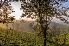 Beautiful sunrise over Tea plantation valley. View of Sunrise over Tea plantation in Connoor, Tamil Nadu. Closer to Ooty which is also known as queen of hills stock photos