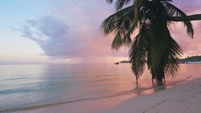 Beautiful sunrise over the tropical beach with coconut palm trees. Punta Cana resort, Dominican Republic.  stock video