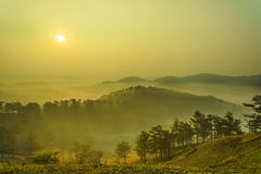Sunrise on a pine hill. Beautiful sunrise on a pine hill at Dalat, Vietnam. The city is famous for the cool weather and nice landscape Stock Images