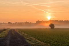 Beautiful sunrise on a red sky, awaking the world. Beautiful sunrise on a red sky, awaking the world next to a sugar beet field. Filed way leading north on a stock photo
