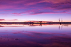 Beautiful Sunrise Reflection. A beautiful sunrise reflection at Bosque del Apache NWR in New Mexico royalty free stock photo