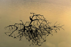Beautiful sunrise and reflection of Geronticus calvus in hagamon lake Royalty Free Stock Image