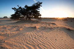 Beautiful sunrise on sand dunes with pone tree Royalty Free Stock Photography