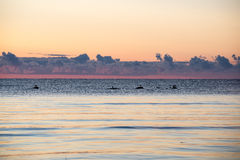 Beautiful sunrise in the sea at the wild beach Royalty Free Stock Photography