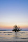 Beautiful sunrise and silhouette tree Stock Photo