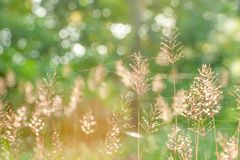 Beautiful sunrise in springtime, sunbeam ray shining through a forest on wild flowers and cobweb. Art transparent and bokeh. Blurred backgrounds. Selective royalty free stock image