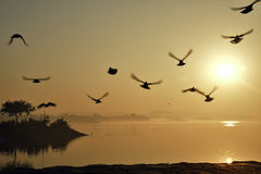 Beautiful Sunrise at Sukhna Lake chandigarh. Birds are flying. Sun is rising on Sukhna Lake chandigarh. Birds are enjoying Royalty Free Stock Photography