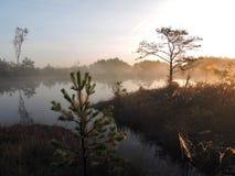 Beautiful sunrise in swamp near lake , Lithuania Stock Photos