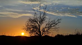 Beautiful sunrise with tree backlit Royalty Free Stock Images