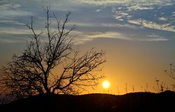 Beautiful sunrise with tree backlit Royalty Free Stock Photography