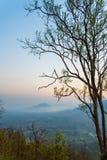 Beautiful sunrise tree Royalty Free Stock Photo