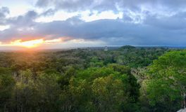 A beautiful sunrise view of the Tikal Ruins and Temple IV in Tikal National Park, Guatemela, with howler monkeys making loud stock photo