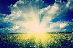 Beautiful sunrise on wheat field instagram stile royalty free stock photo