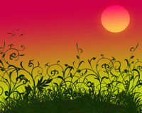Beautiful sunset Stock Images