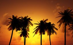Beautiful sunset Royalty Free Stock Photos