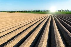 Sunset above the field with rows. Beautiful sunset above the brown field with rows Royalty Free Stock Photos