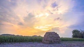 Beautiful sunset above corn fields Stock Image